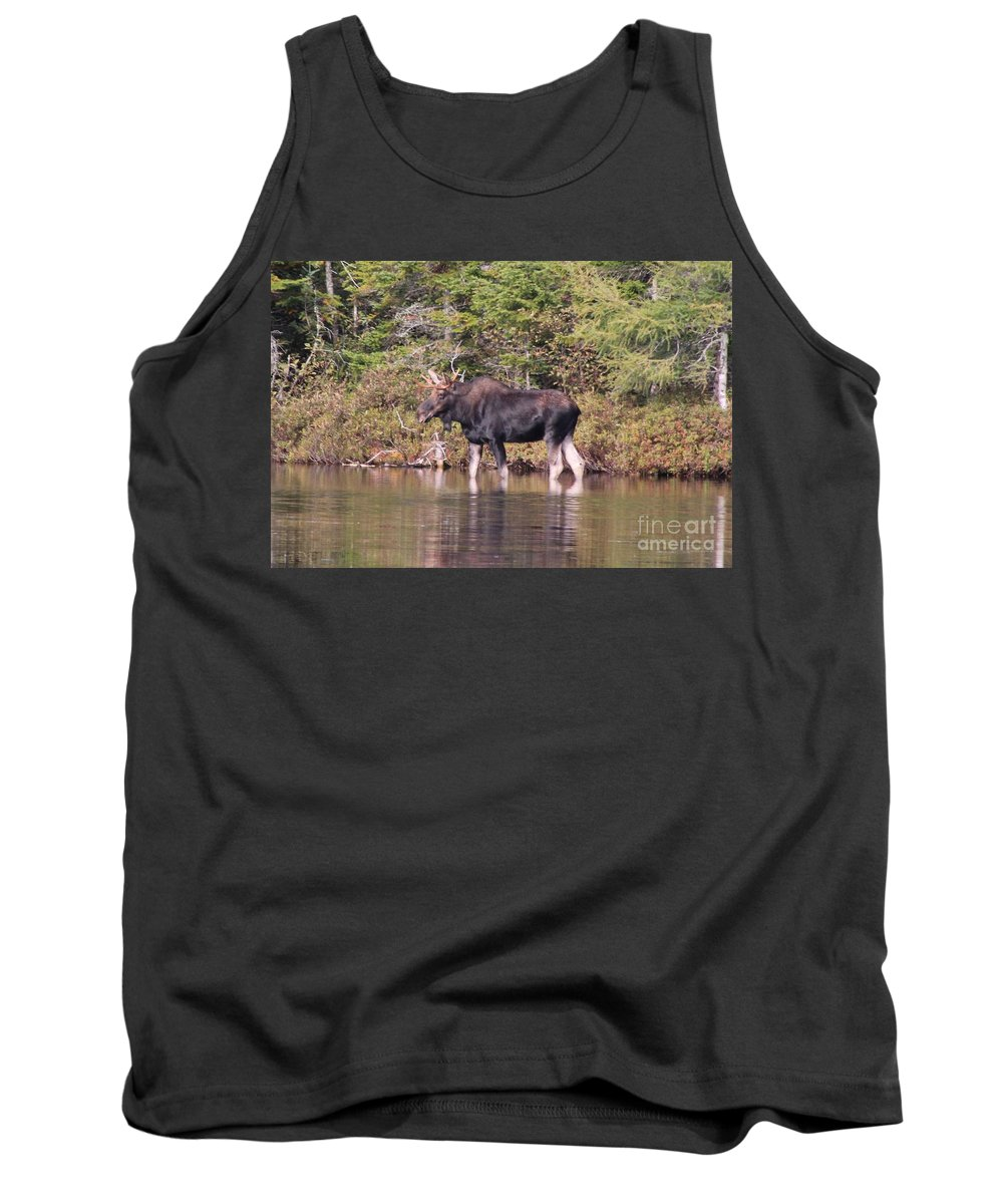 Maine Moose Tank Top featuring the photograph Moose_0591b by Joseph Marquis