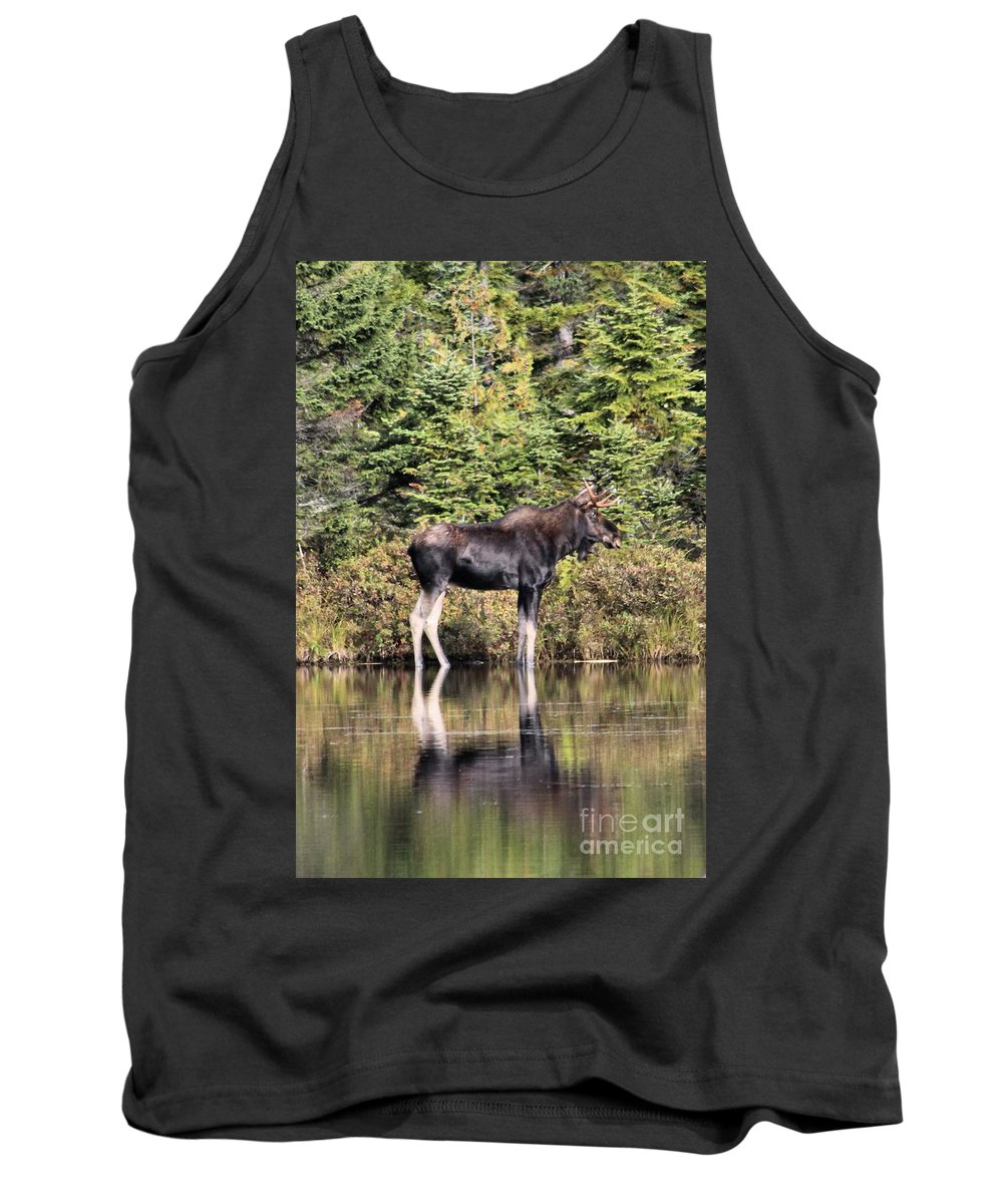 Maine Moose Tank Top featuring the photograph Moose_0609 by Joseph Marquis