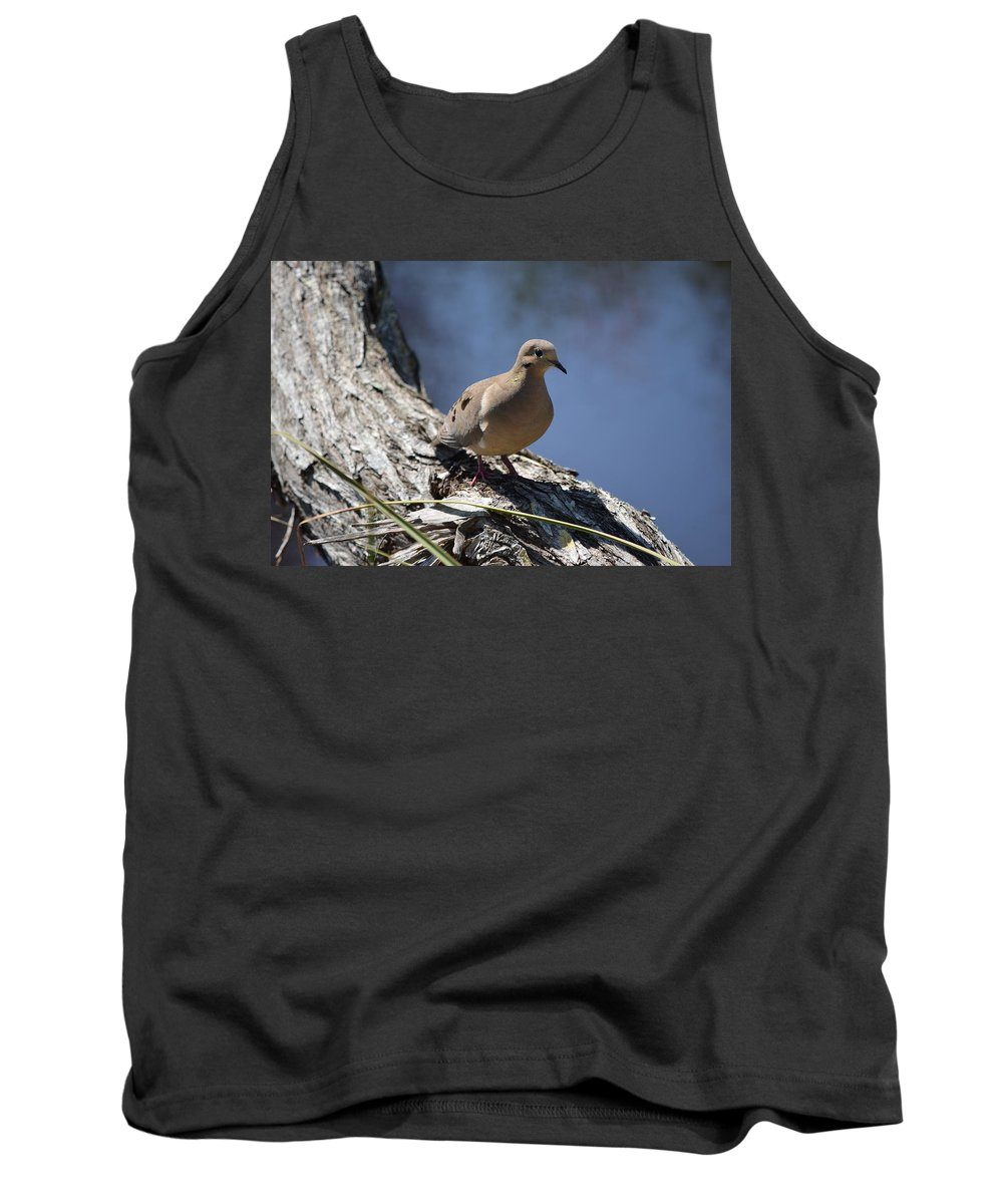 Morning Dove Tank Top featuring the photograph Morning Dove by James Petersen