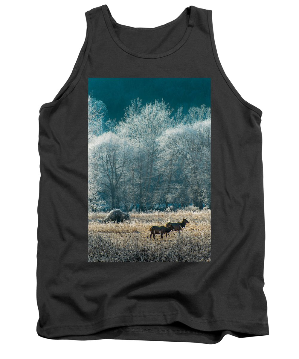 Elk Tank Top featuring the photograph Morning Frost by Scott Hafer