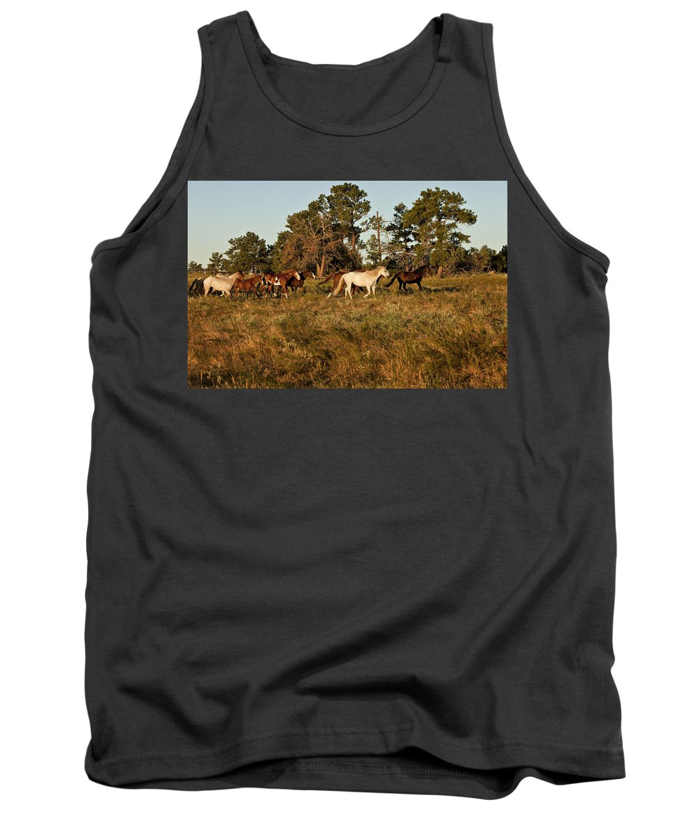 Horse Tank Top featuring the photograph Morning Walk by Jack Milchanowski