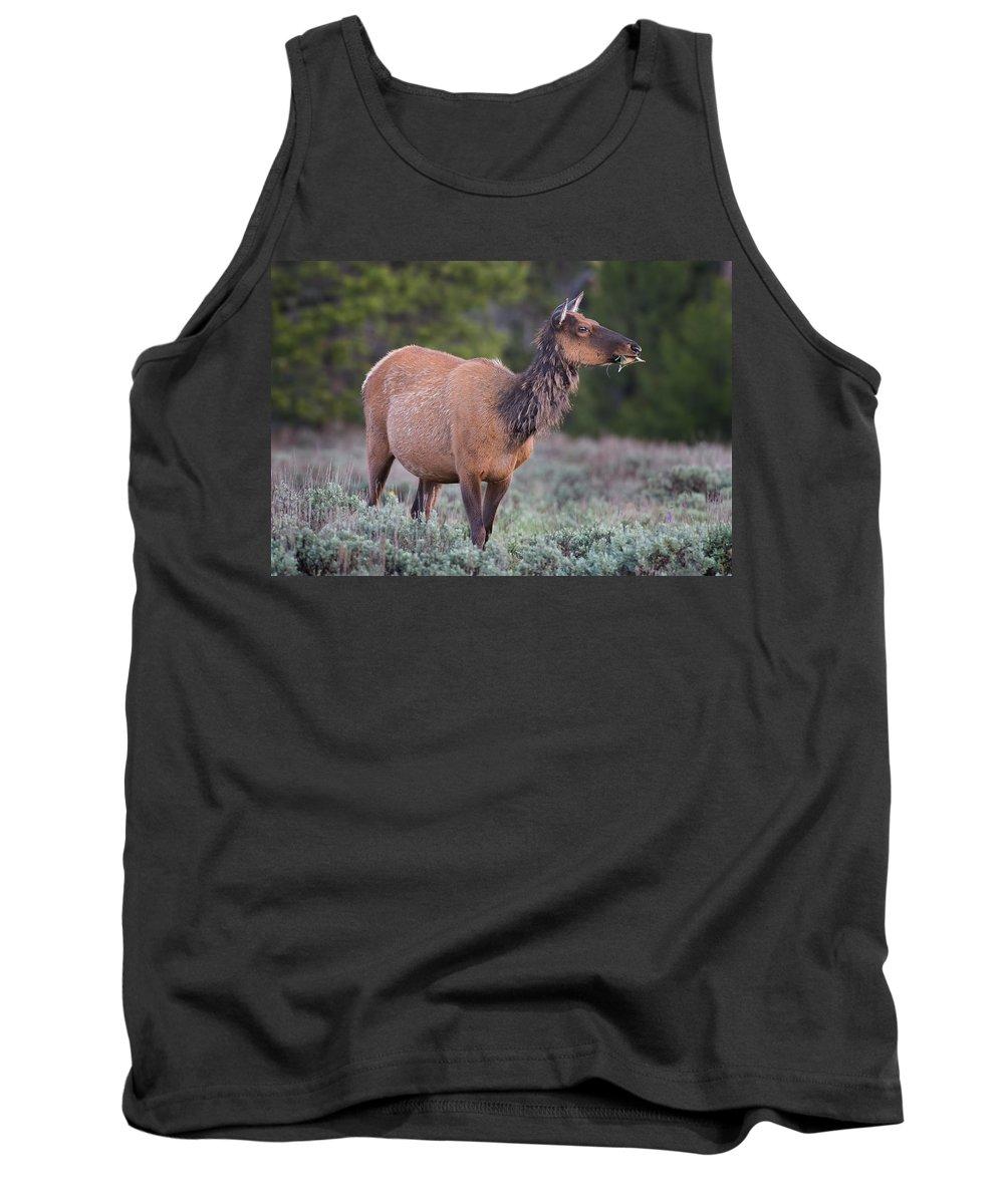 Elk Tank Top featuring the photograph Munching Elk Grand Teton National Park by Martin Belan