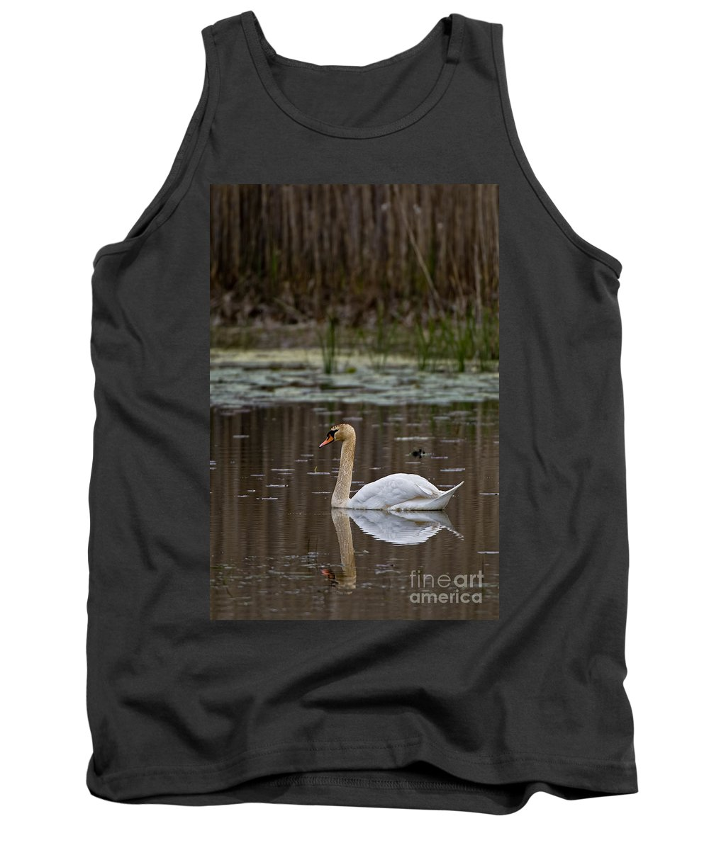 Mute Swan Tank Top featuring the photograph Mute Swan Pictures 143 by World Wildlife Photography