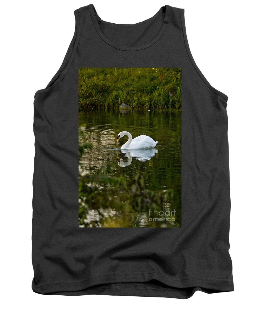 Mute Swan Tank Top featuring the photograph Mute Swan Pictures 85 by World Wildlife Photography