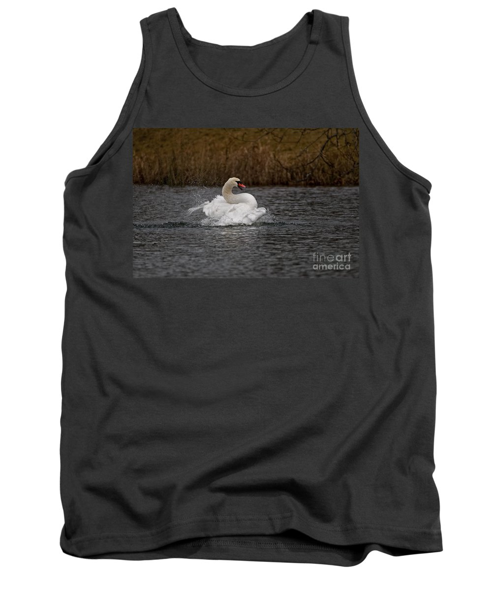 Mute Swan Tank Top featuring the photograph Mute Swan Pictures 97 by World Wildlife Photography
