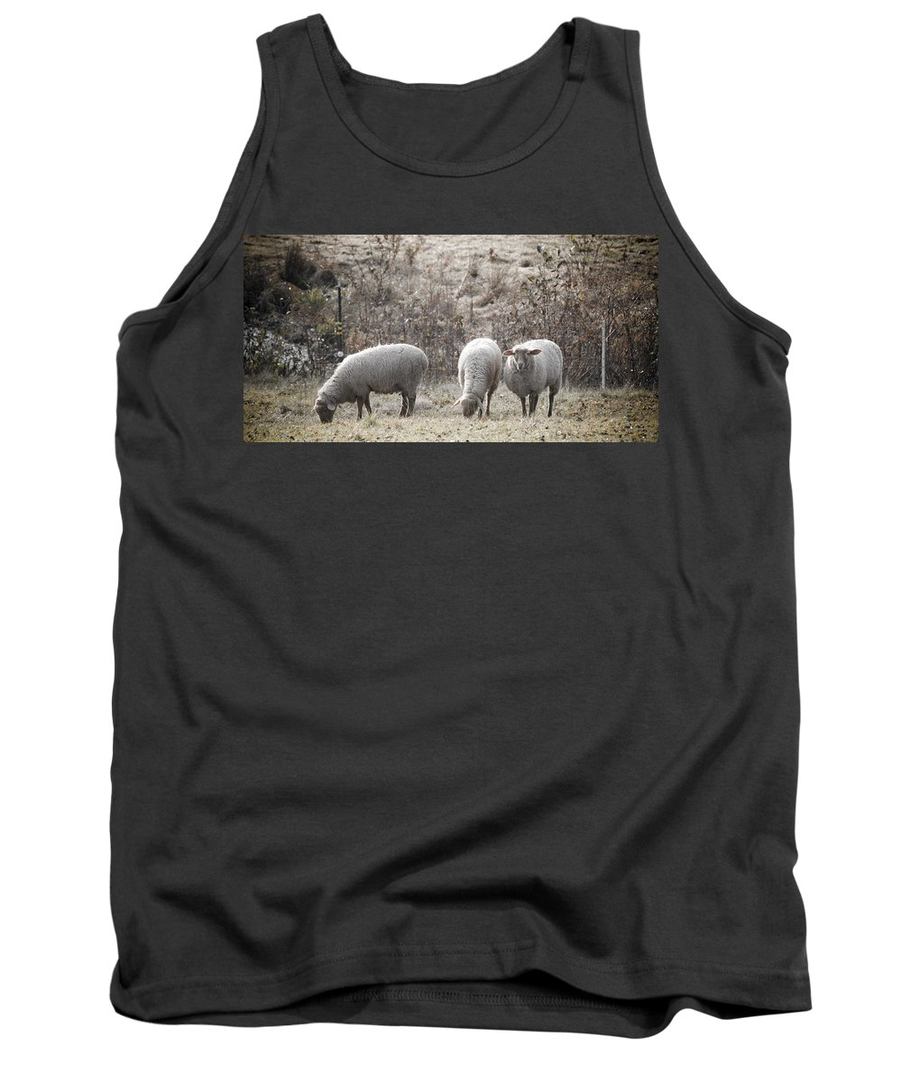 Sheep Tank Top featuring the photograph My Next Afghan by Trish Tritz