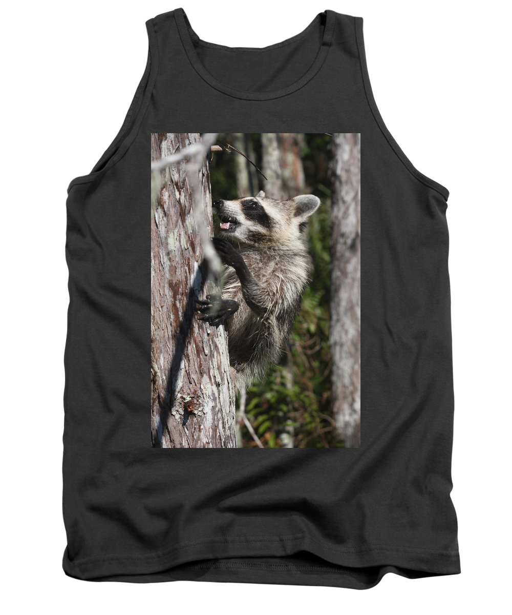 Raccoon Tank Top featuring the photograph Nasty Raccoon In A Tree by Christiane Schulze Art And Photography
