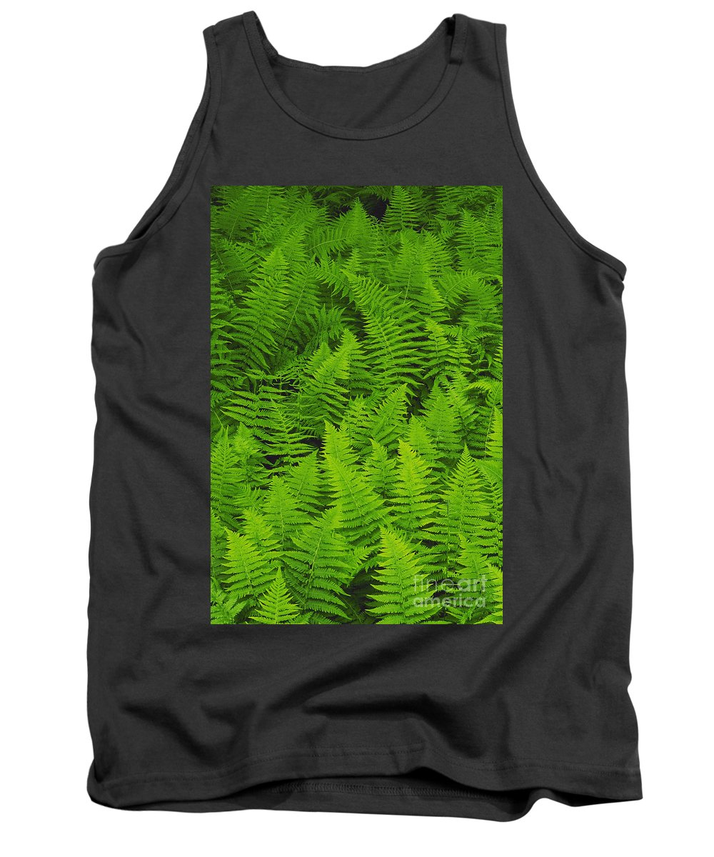 Nature Tank Top featuring the photograph New York Ferns by David Davis