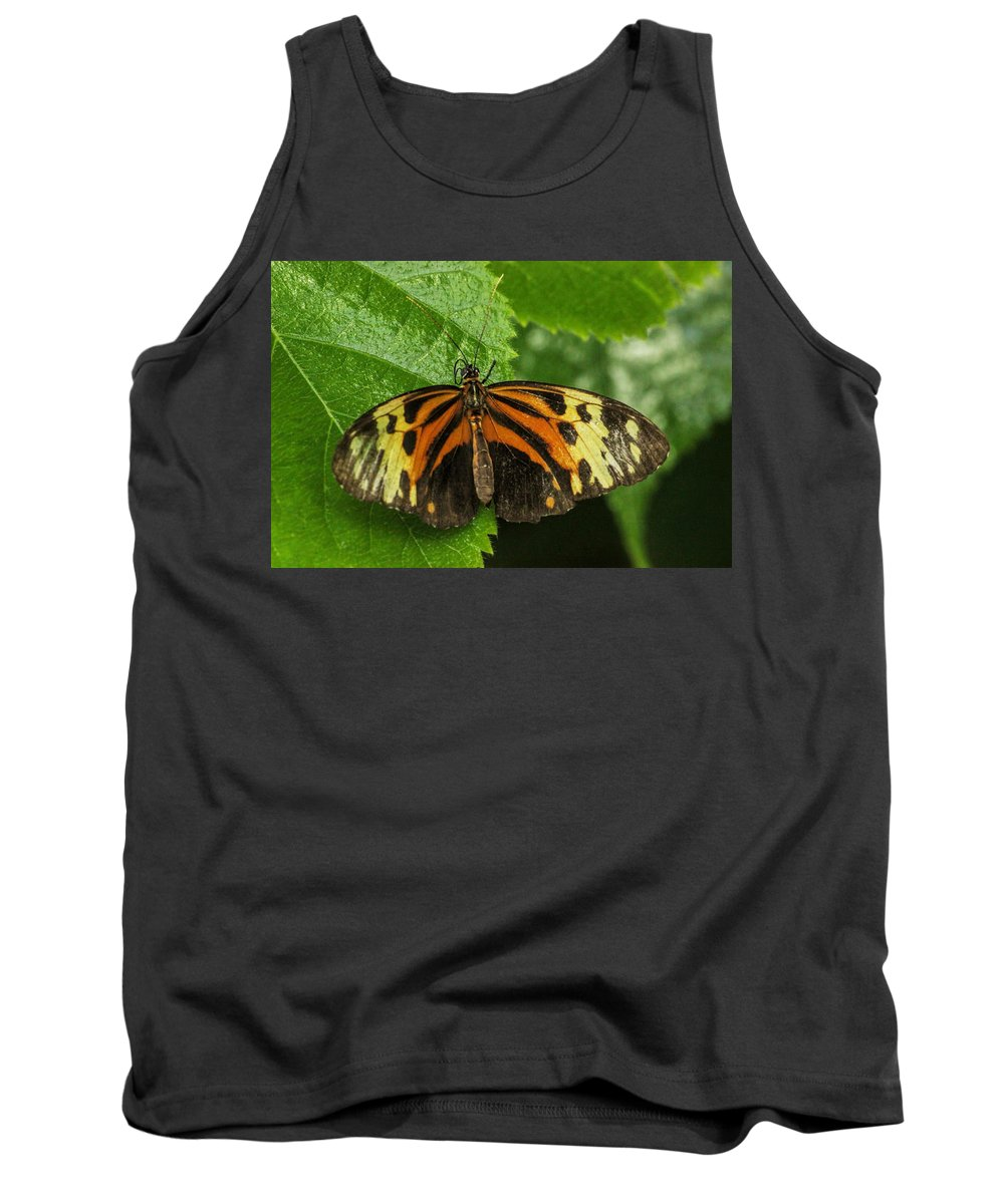 Nectar Tank Top featuring the photograph Numata Longwing Butterfly by Becca Buecher