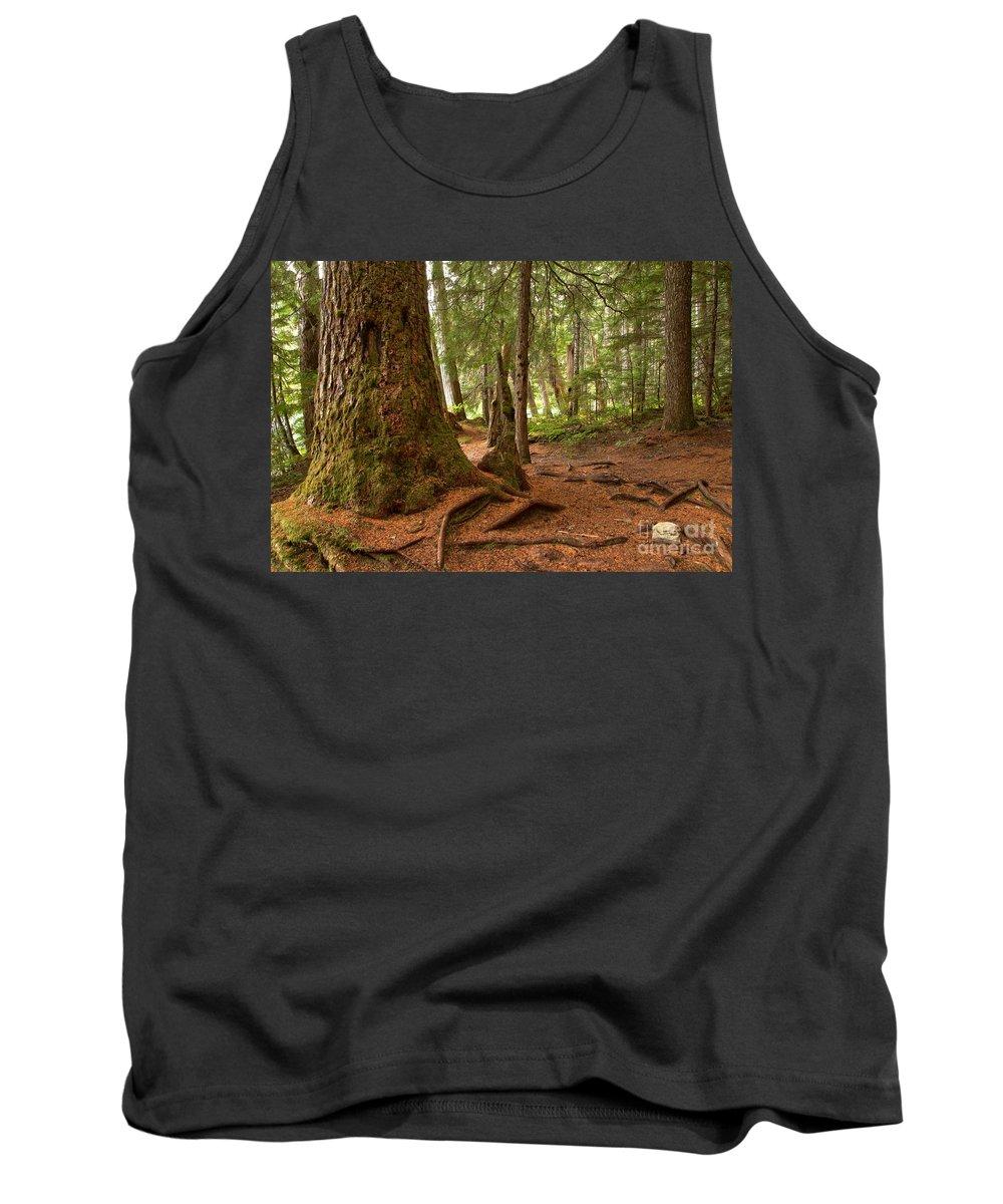 Cheakamus Rainforest Tank Top featuring the photograph Old Growth Cedar At Cheakamus Lake by Adam Jewell