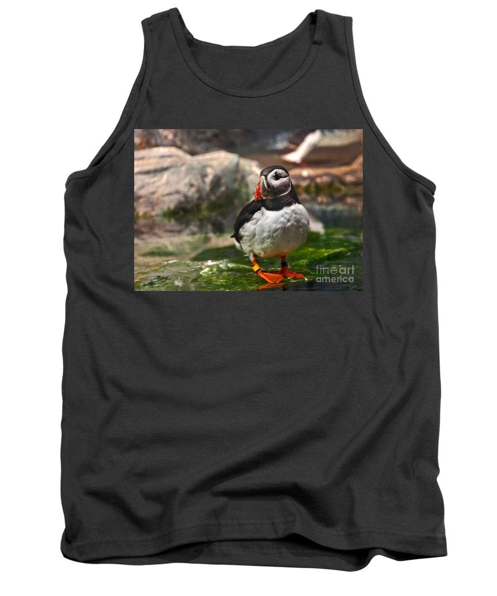 Beak Tank Top featuring the photograph One Puffin Bird Art Prints by Valerie Garner