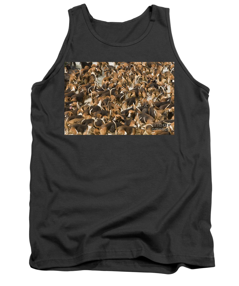 Dogs Tank Top featuring the photograph Pack Of Hound Dogs by Jean-Michel Labat