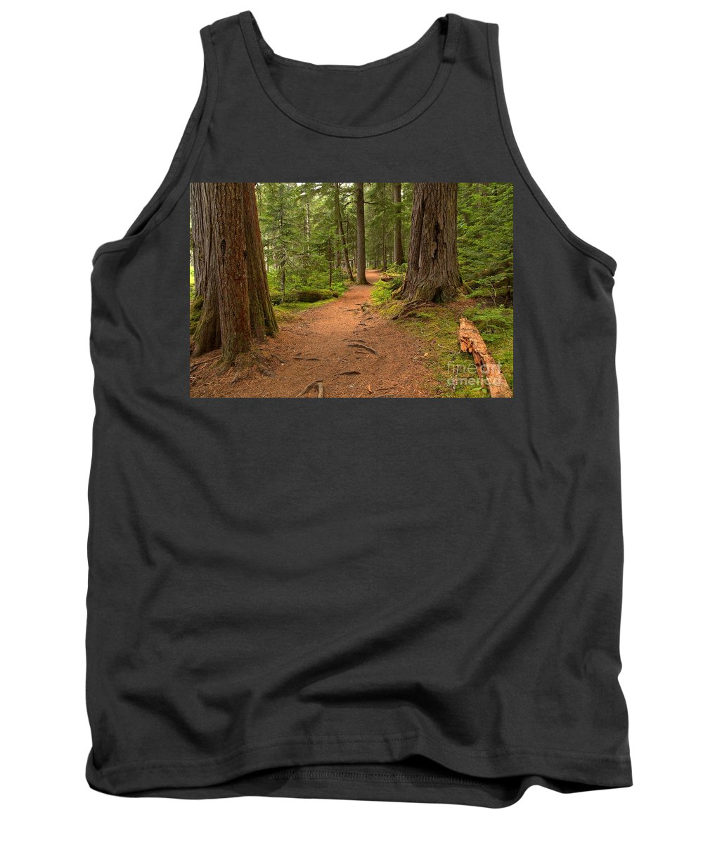 Cheakamus Rainforest Tank Top featuring the photograph Peaceful Path To Cheakamus Lake by Adam Jewell