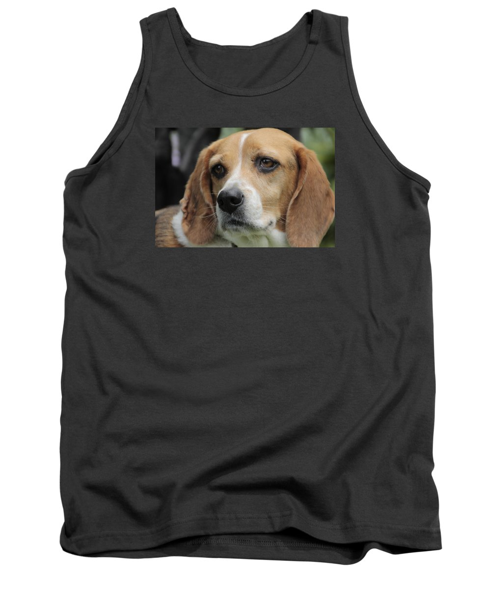 Beagle Tank Top featuring the photograph The Beagle Named Penny by Valerie Collins
