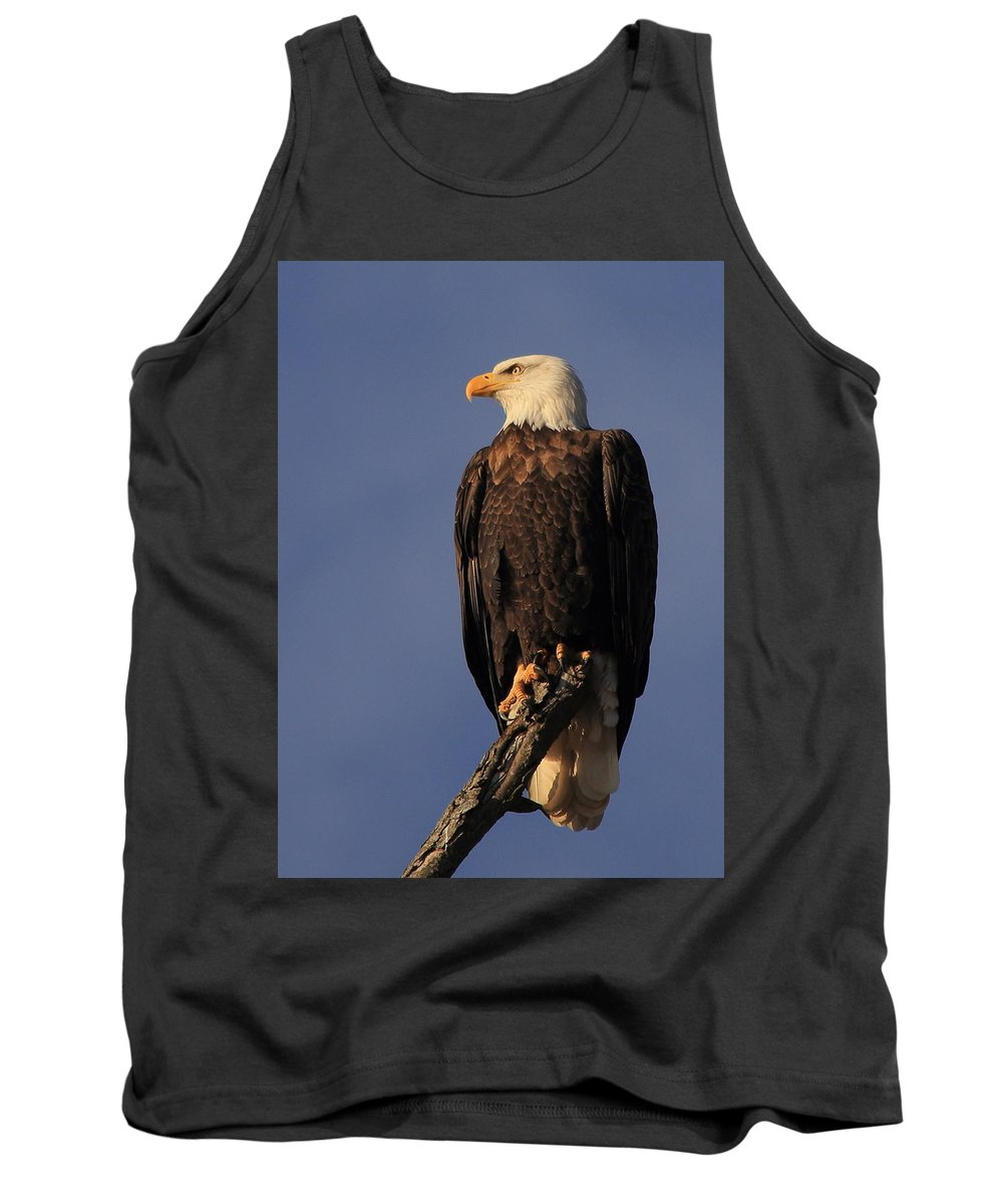 Eagle Tank Top featuring the photograph Perfectly Posed by Scott Rackers