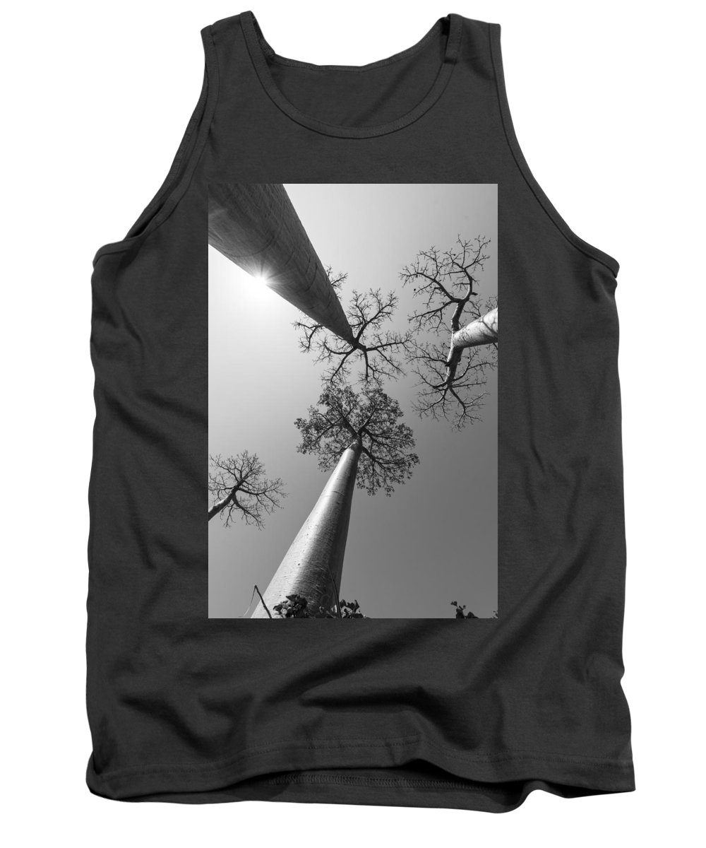 Trees Tank Top featuring the photograph Pillars Of The Community by Alex Lapidus