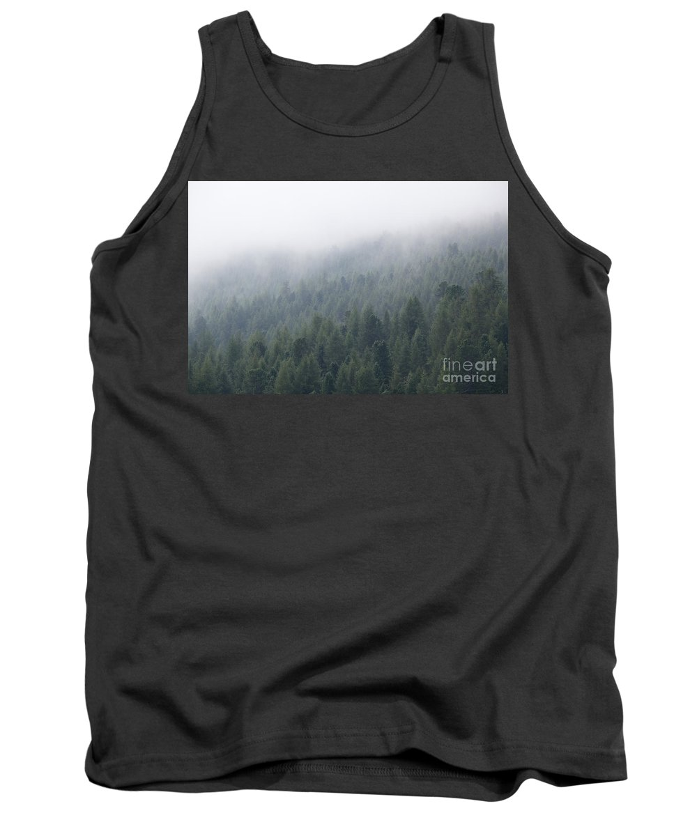 Forest Tank Top featuring the photograph Pine Tree Forest In The Mist by Matteo Colombo