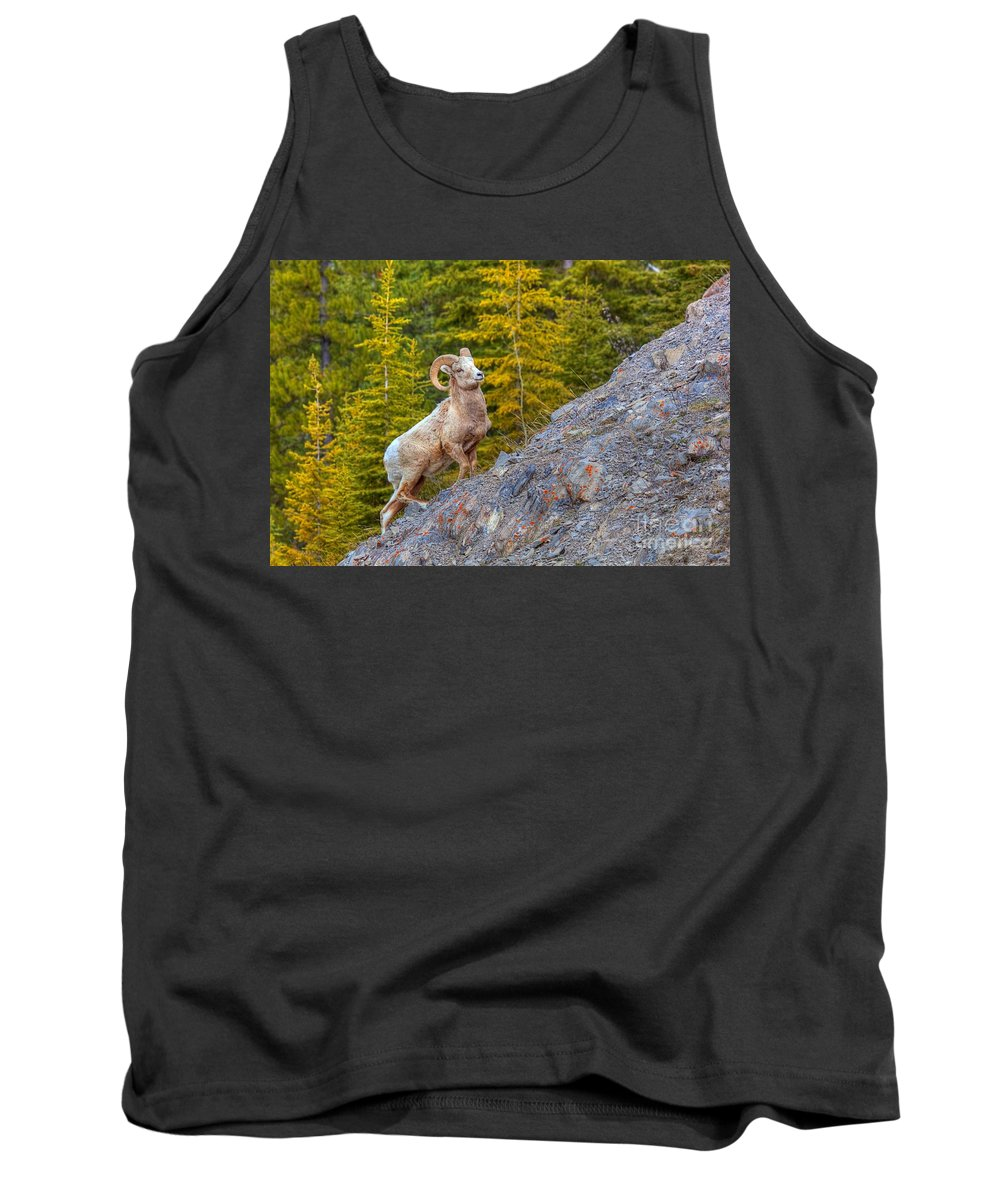 Bighorn Ram Tank Top featuring the photograph Power Up by James Anderson
