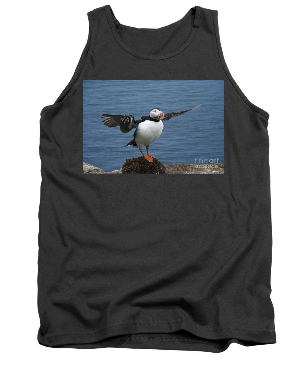 Puffin Tank Top featuring the photograph Puffin Ready To Fly by Heiko Koehrer-Wagner