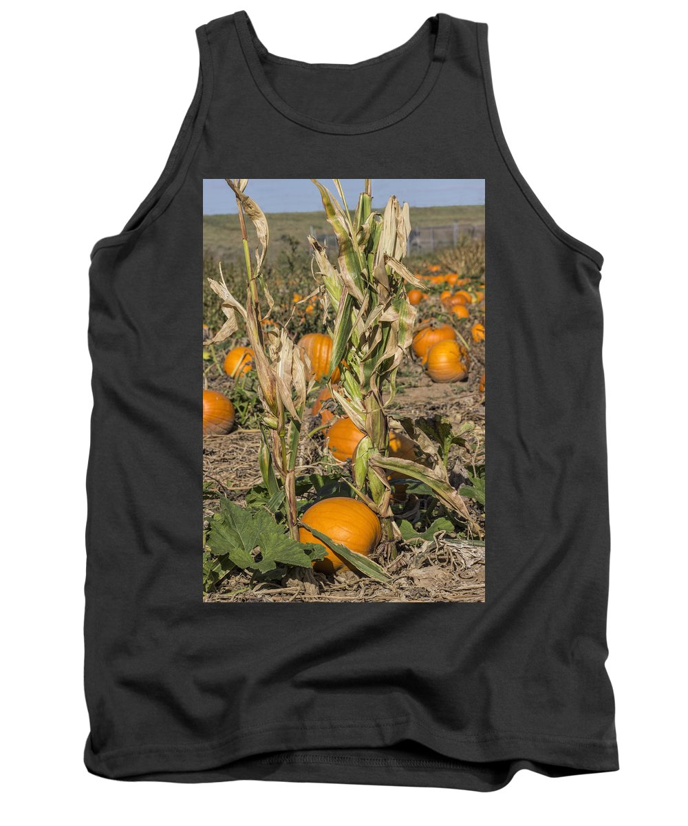 Pumpkin Patch Tank Top featuring the photograph Pumpkin Patch by Becca Buecher