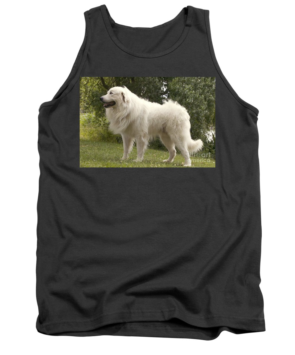 Pyrenean Mountain Dog Tank Top featuring the photograph Pyrenean Mountain Dog by Jean-Michel Labat
