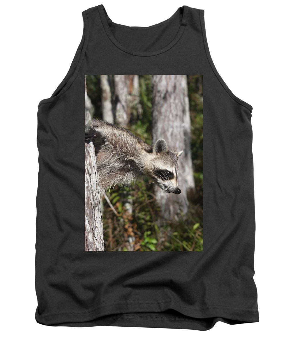 Raccoon Tank Top featuring the photograph Raccoon by Christiane Schulze Art And Photography