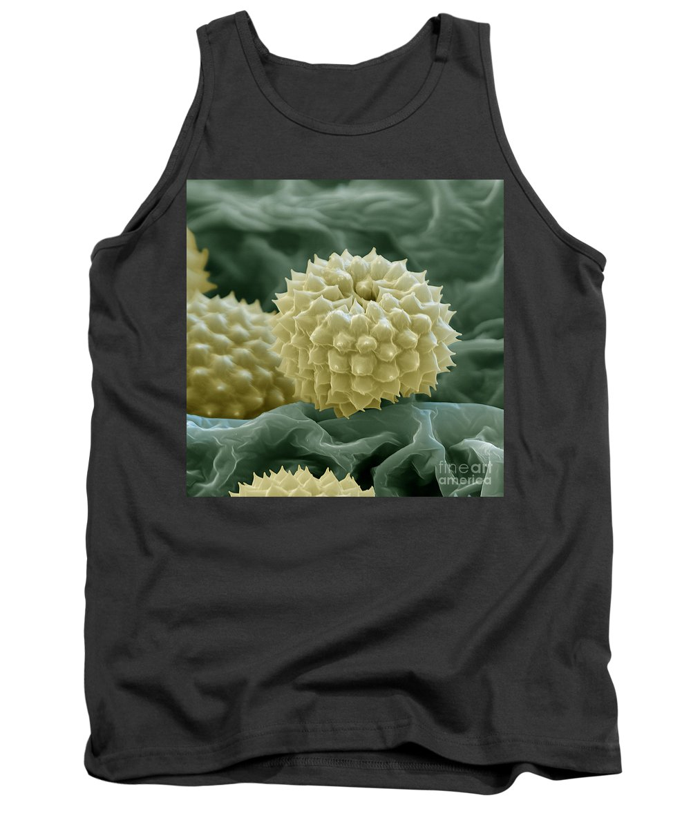 Allergen Tank Top featuring the photograph Ragweed Pollen by Eye of Science