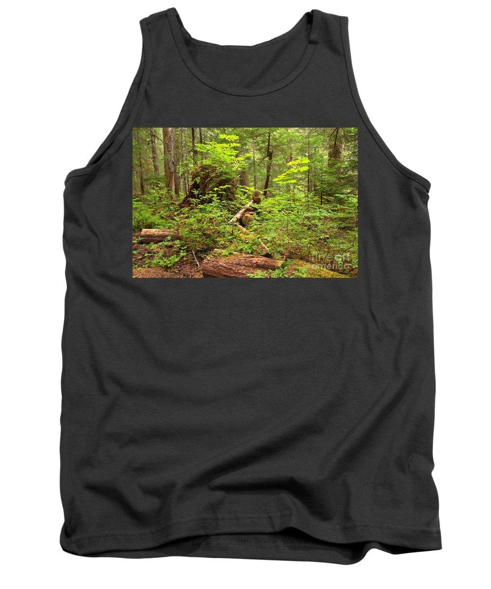 Cheakamus Rainforest Tank Top featuring the photograph Rainforest Green Everywhere by Adam Jewell
