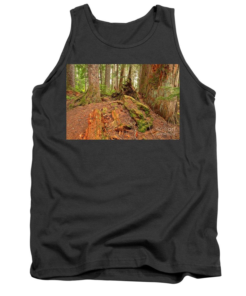 Cheakamus Rainforest Tank Top featuring the photograph Recycling In The Cheakamus Rainforest by Adam Jewell