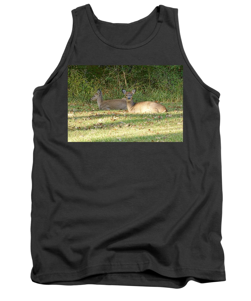 Sunny Tank Top featuring the photograph Relaxing In The Sun And Shade by Alan Hutchins