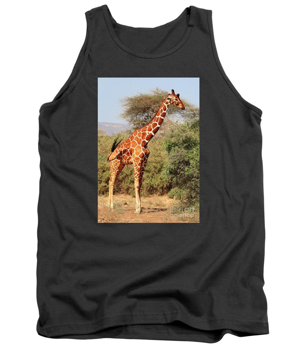 Kenya Tank Top featuring the photograph Reticulated Giraffe by Liz Leyden