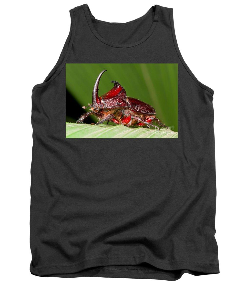 Rhinoceros Beetle Tank Top featuring the photograph Rhinoceros Beetle by BG Thomson