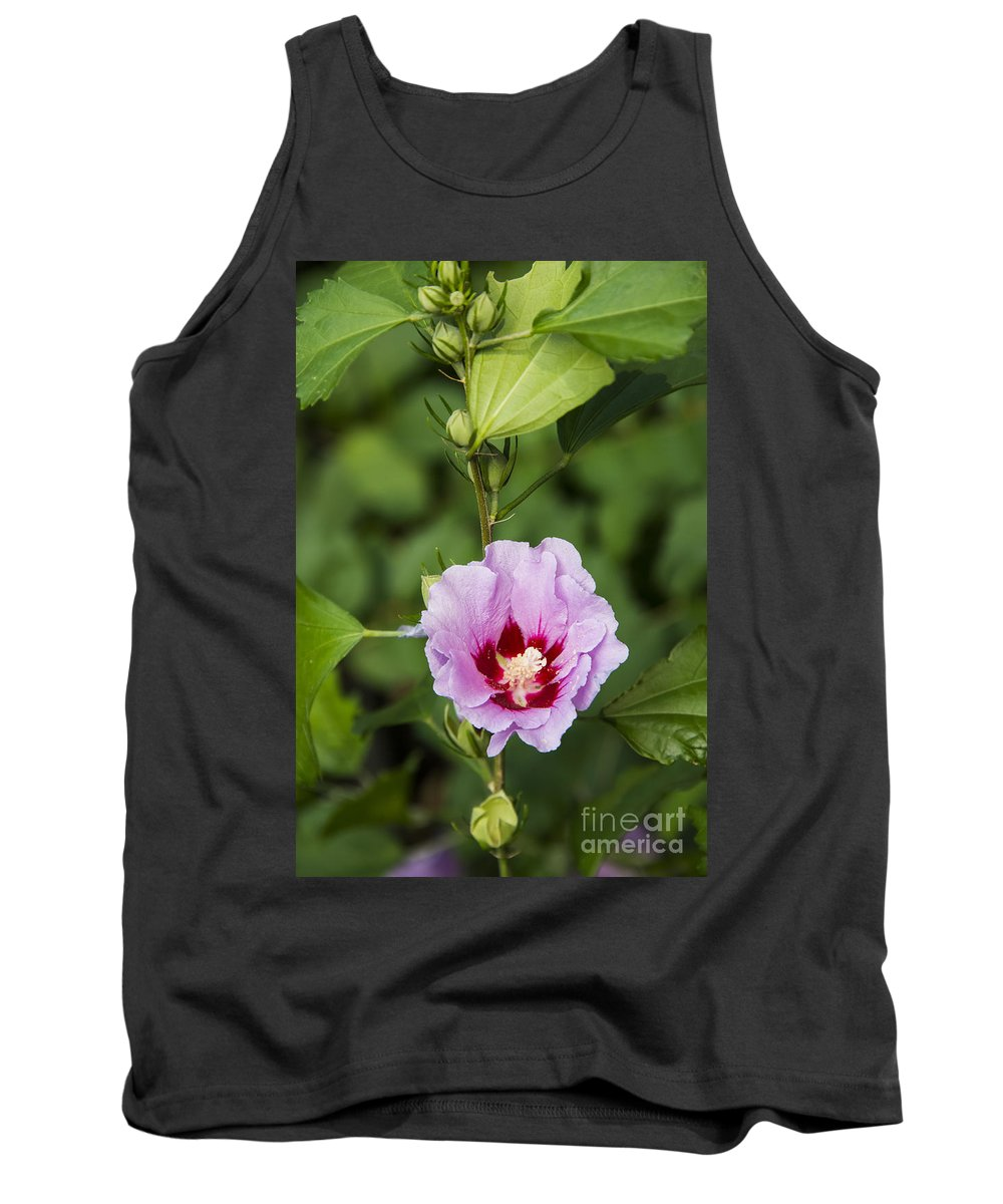 Rose Of Sharon Roses Flower Flowers Bud Buds Tank Top featuring the photograph Rose Of Sharon by Bob Phillips