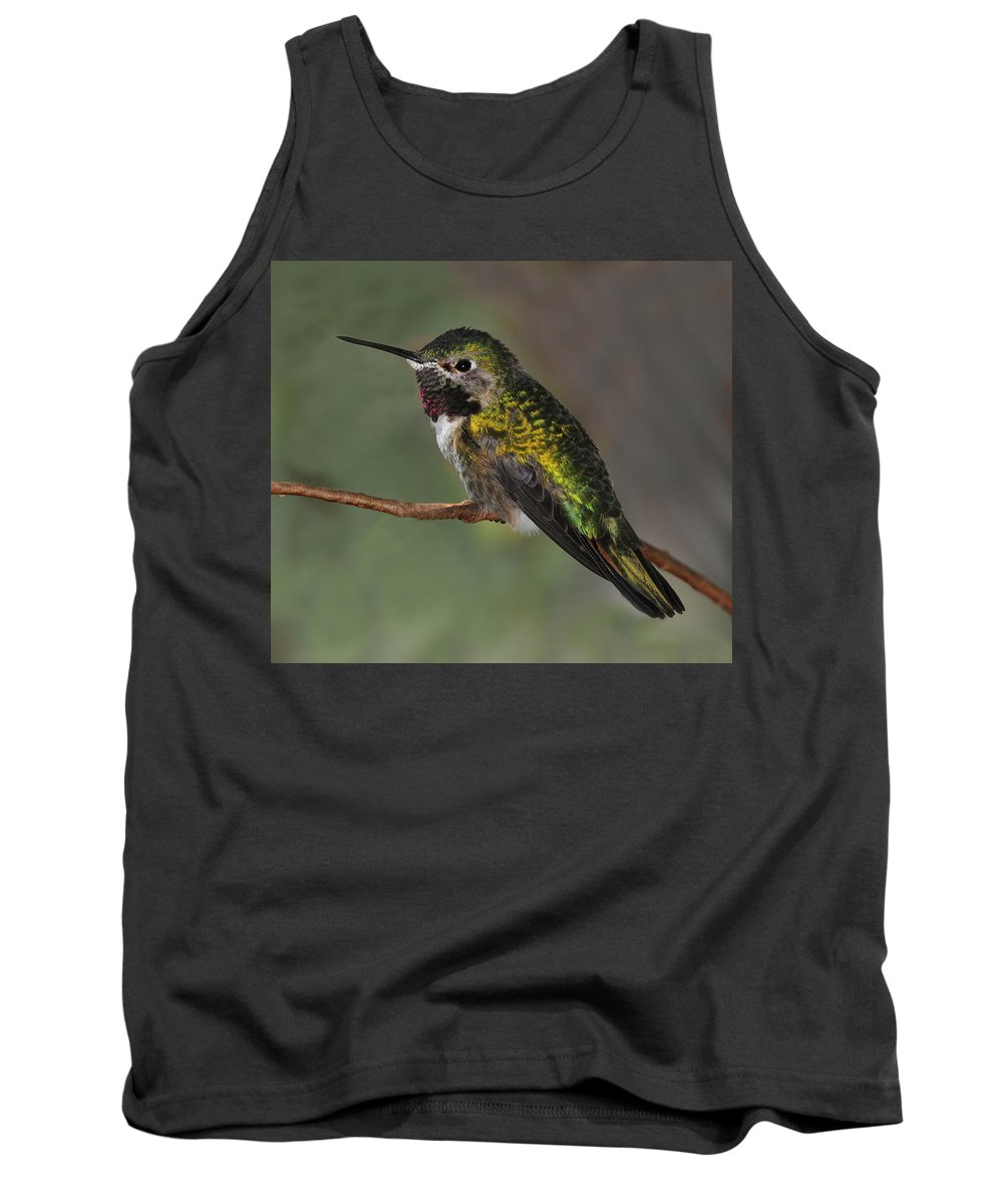 Rufous Hummingbird Tank Top featuring the photograph Rufous Hummingbird by Dave Mills