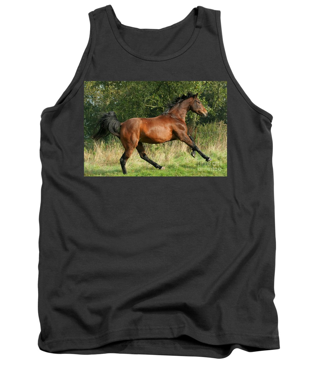Horse Tank Top featuring the photograph run by Angel Ciesniarska