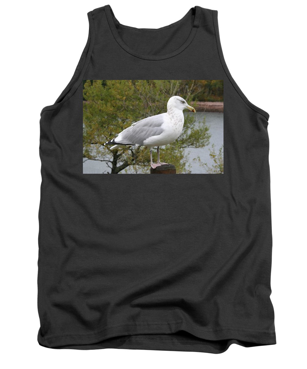 Seagull Tank Top featuring the photograph Seagull Outlook by Christiane Schulze Art And Photography
