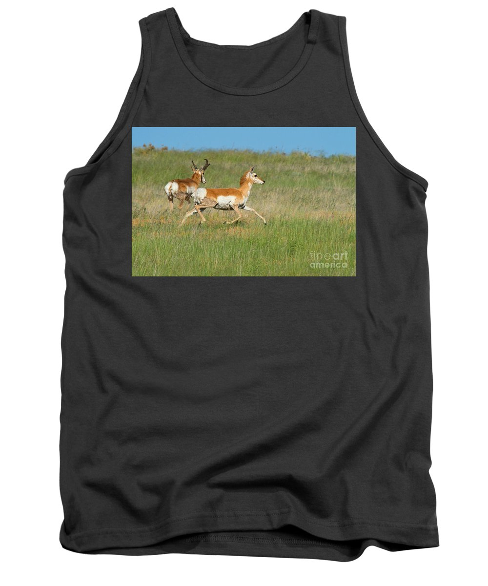Pronghorn Antelope Tank Top featuring the photograph Separate Ways by Jim Garrison