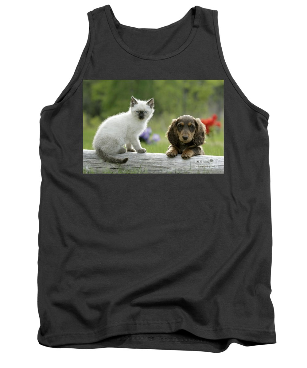 Siamese Kitten Tank Top featuring the photograph Siamese Kitten And Dachshund Puppy by Rolf Kopfle