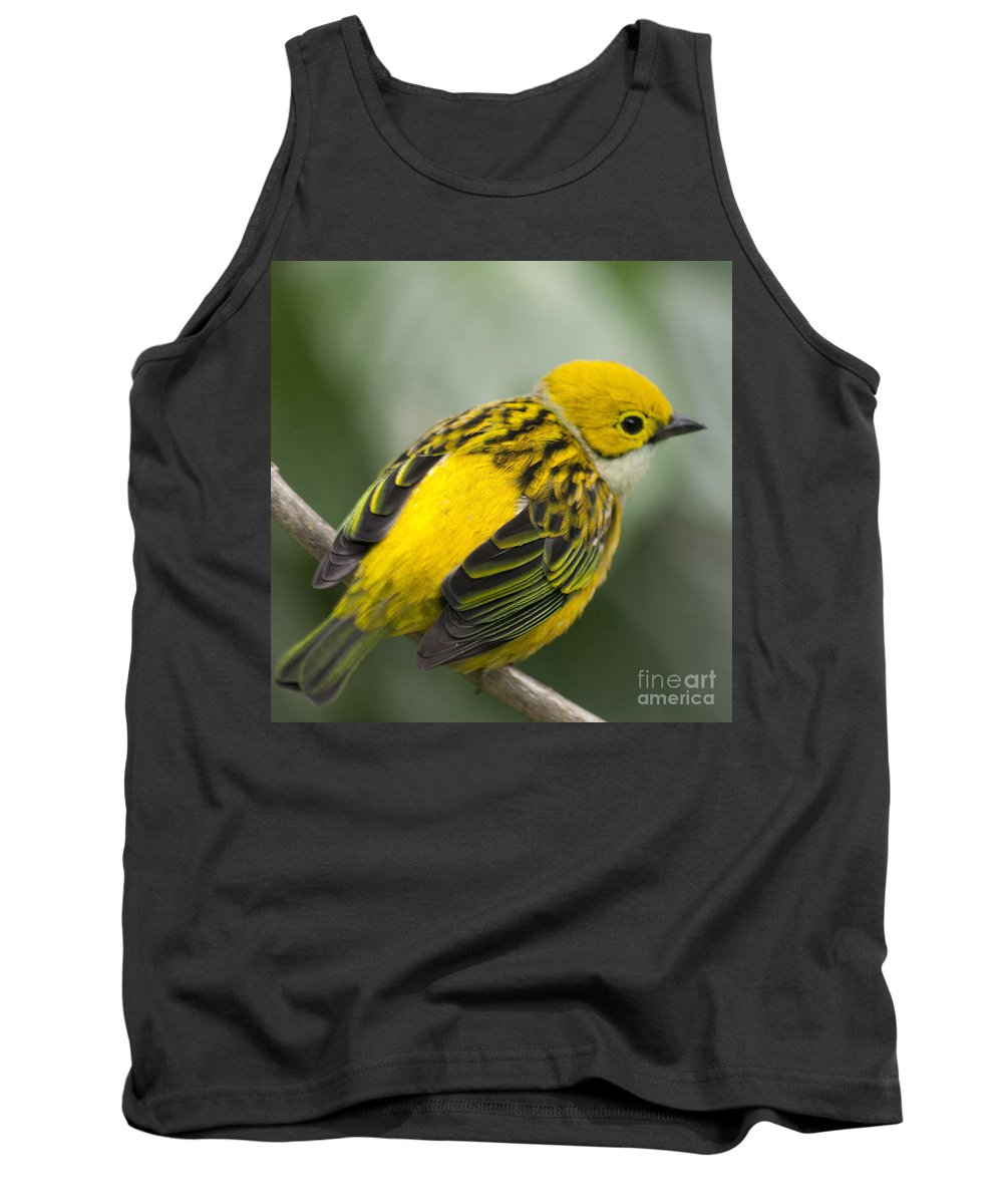Tanager Tank Top featuring the photograph Silver-throated Tanager - Tangara Icterocephala by Heiko Koehrer-Wagner