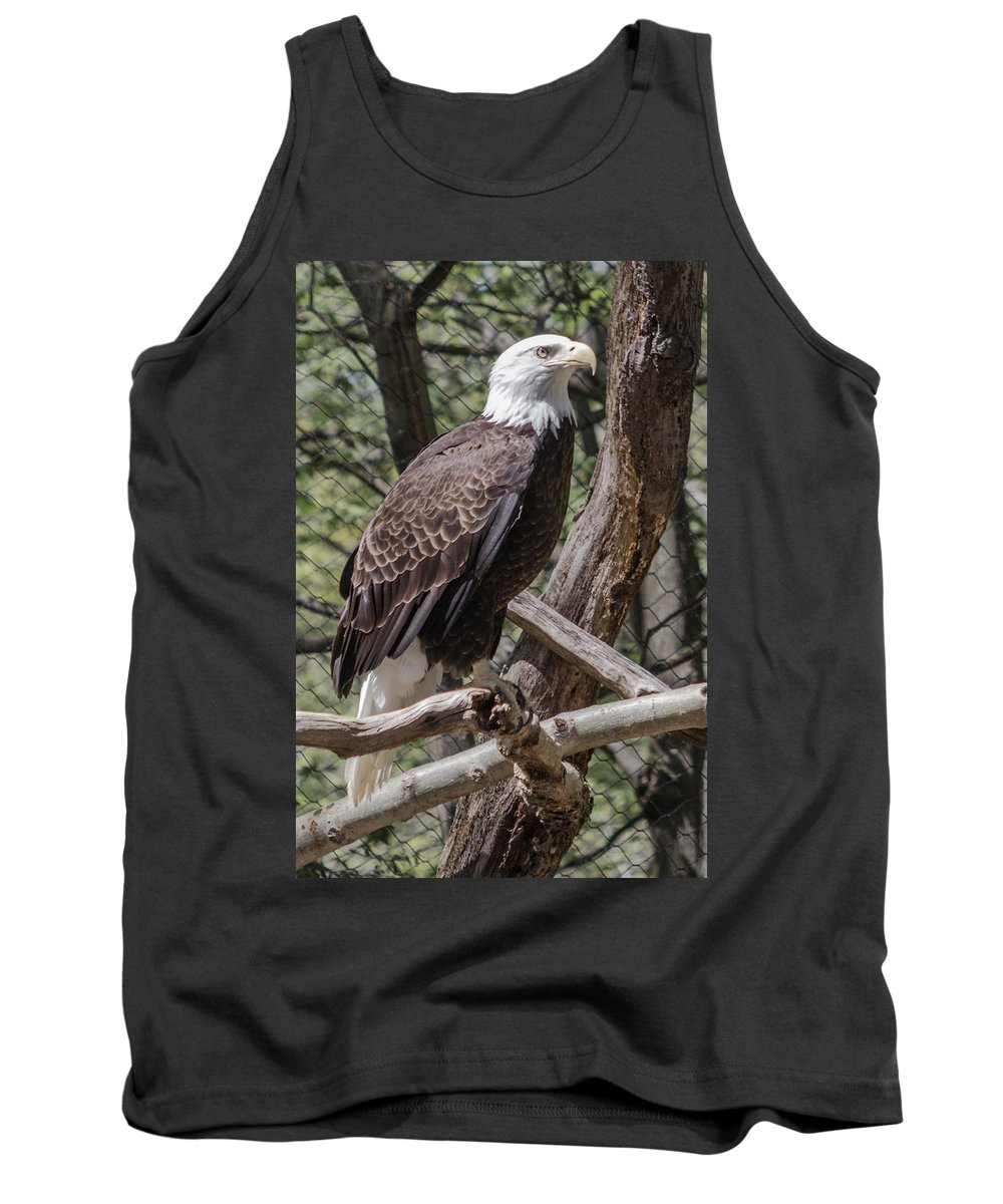 Zoo Tank Top featuring the photograph Single Bald Eagle by Lou Cardinale