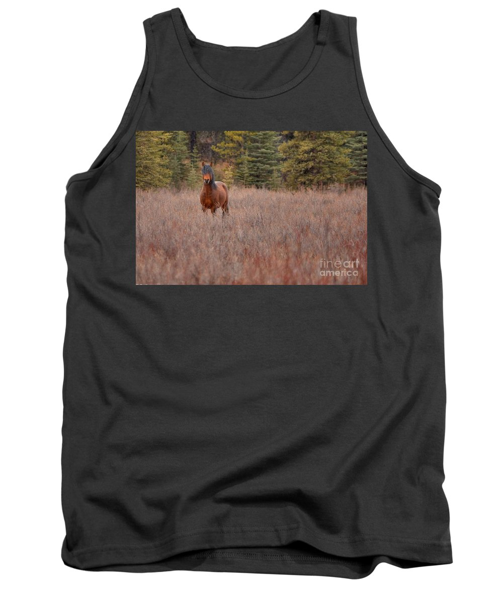 Horse Tank Top featuring the photograph Stand Free by James Anderson
