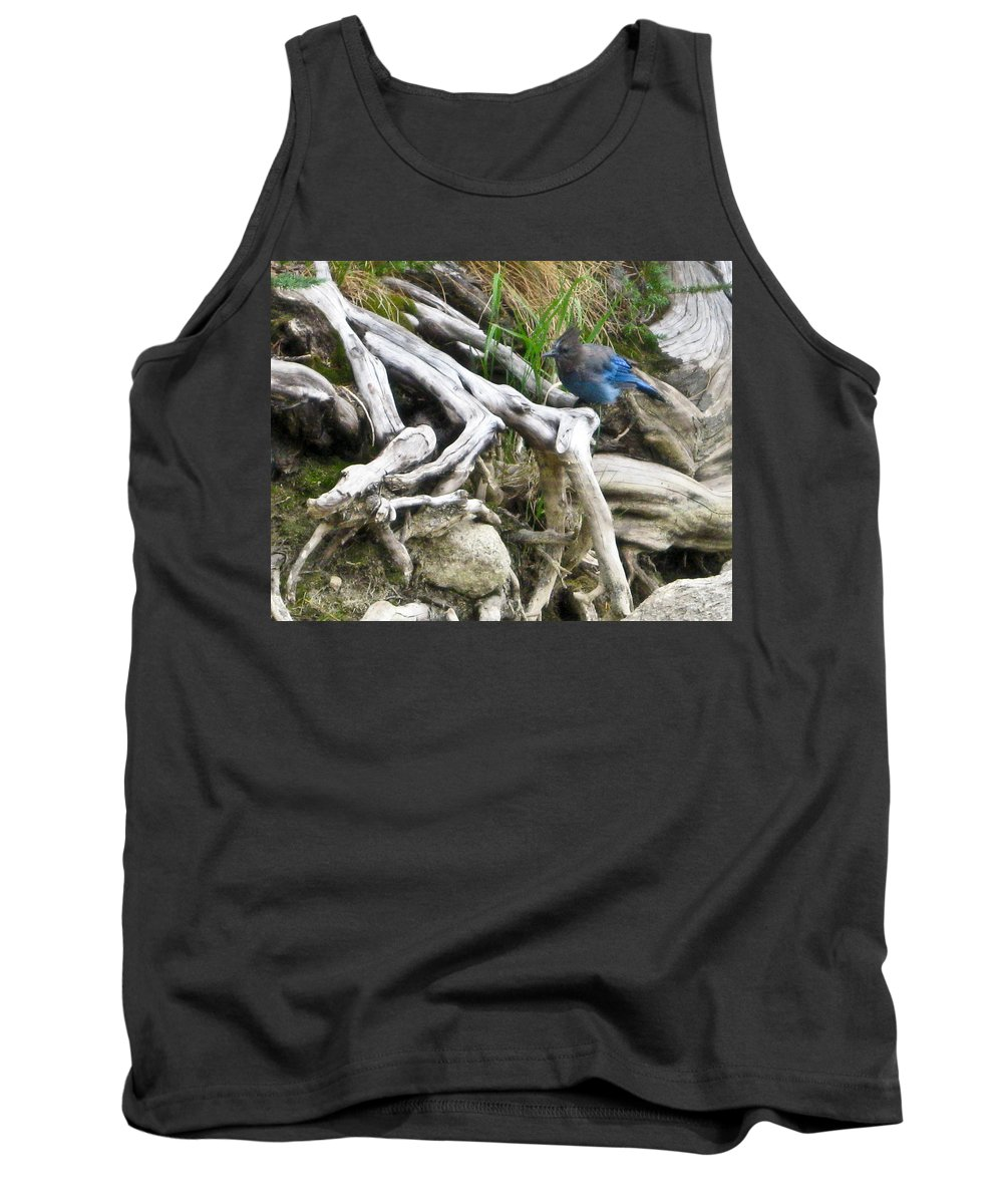 Scrub Jay Tank Top featuring the photograph Stellers Jay by Brian Williamson