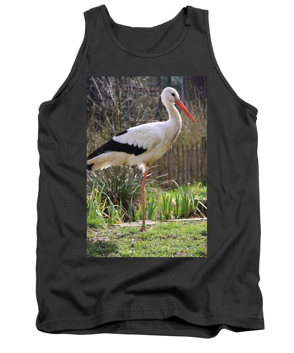 Stork Tank Top featuring the photograph Stork by Christiane Schulze Art And Photography