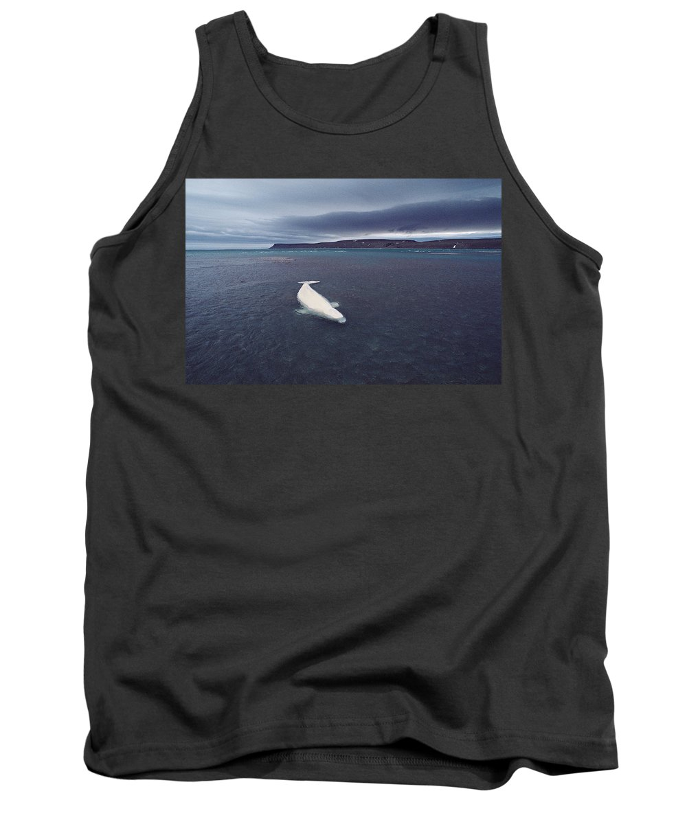 Feb0514 Tank Top featuring the photograph Stranded Beluga Whale Awaiting Incoming by Flip Nicklin