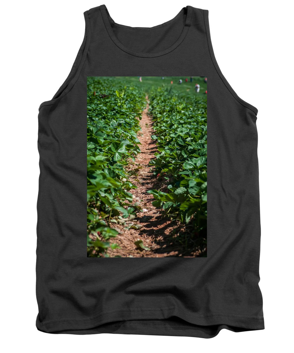 Agricultural Tank Top featuring the photograph Strawberry Farm Field by Alex Grichenko