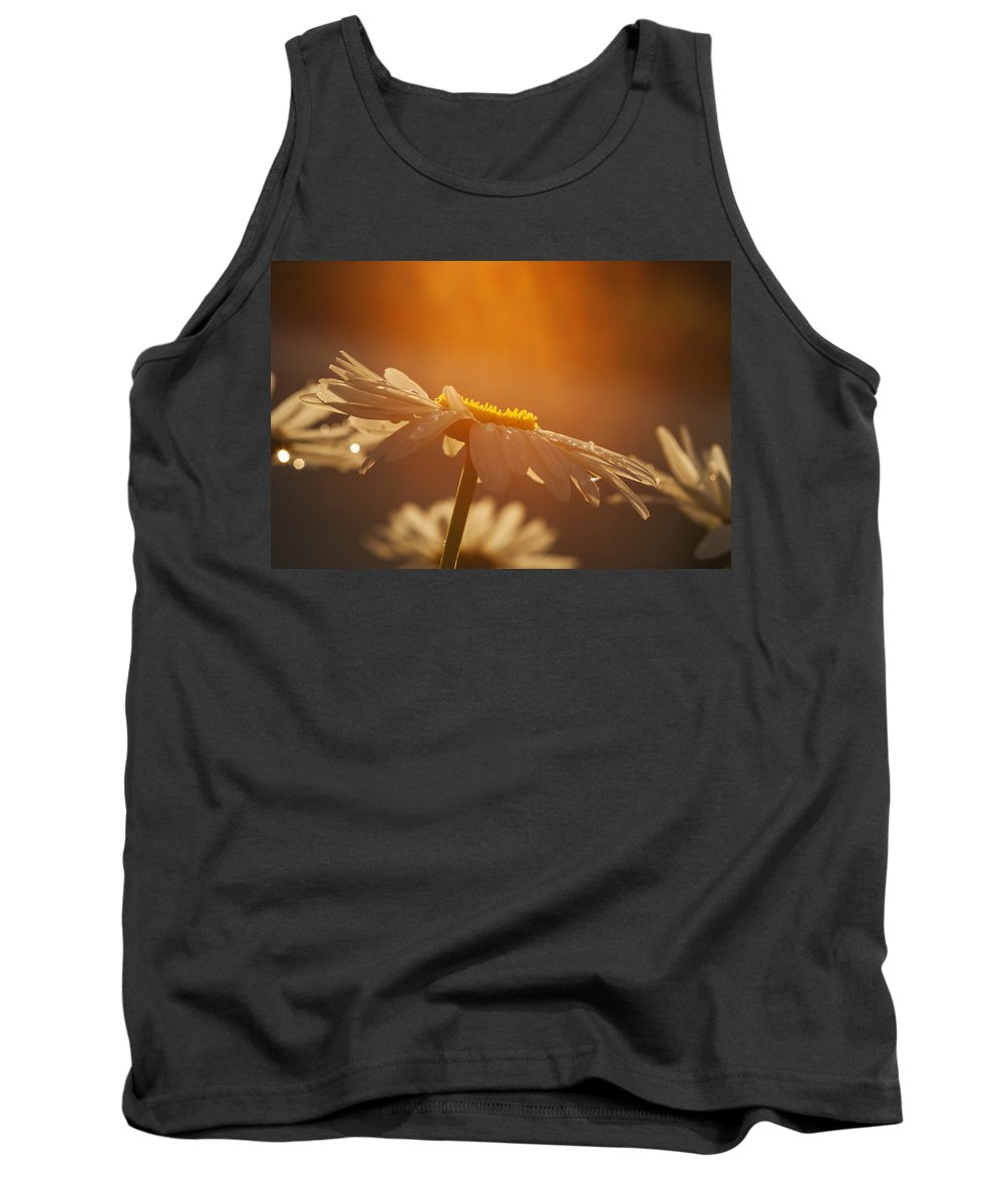 Daisy Tank Top featuring the photograph Sunset Daisy by Vishwanath Bhat