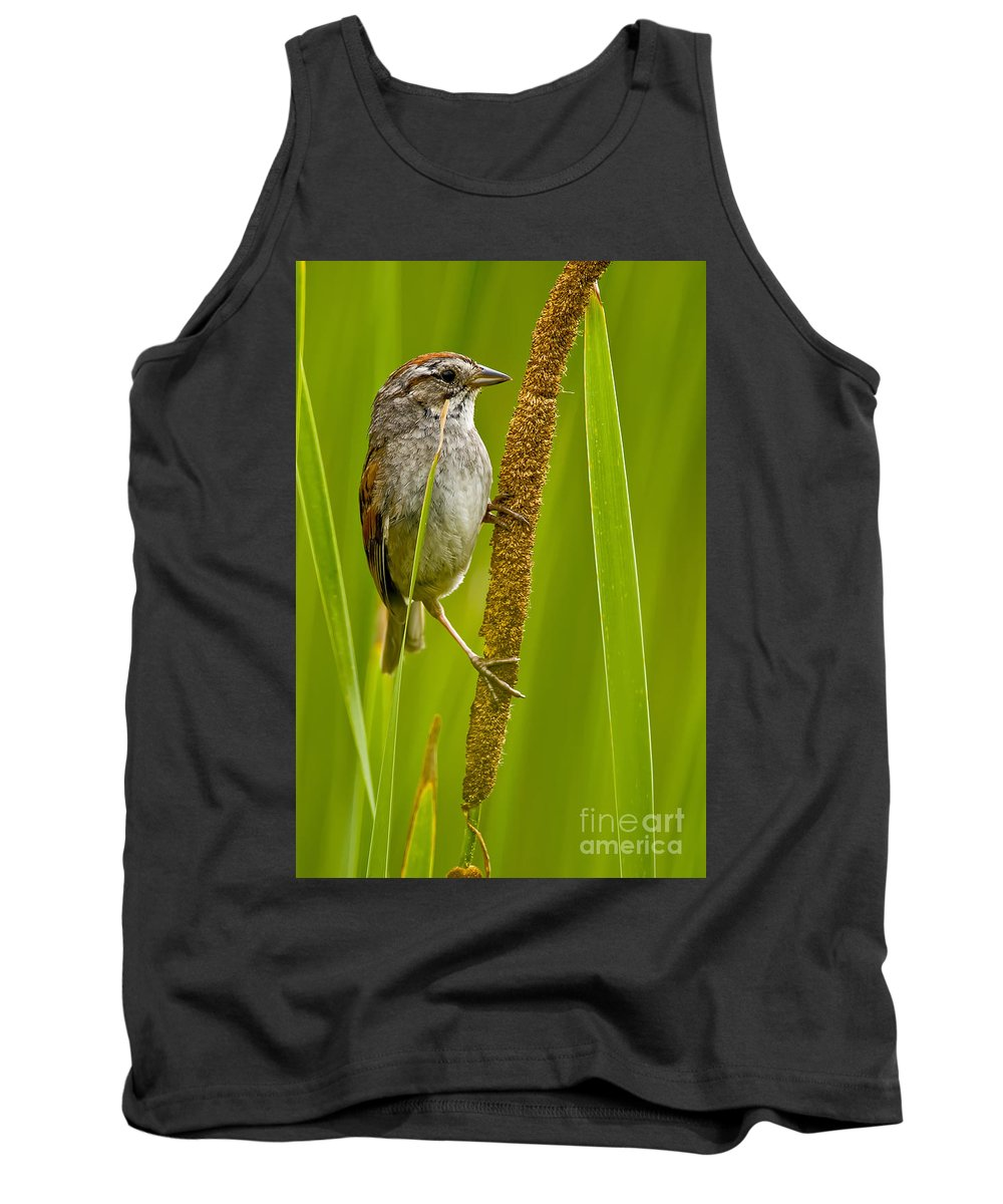 Swamp Sparrow Tank Top featuring the photograph Swamp Sparrow Pictures by World Wildlife Photography