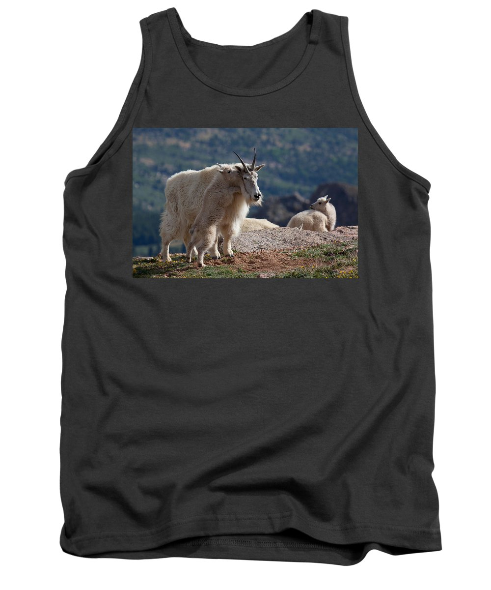 Mountain Goats; Posing; Group Photo; Baby Goat; Nature; Colorado; Crowd; Baby Goat; Mountain Goat Baby; Happy; Joy; Nature; Brothers Tank Top featuring the photograph Tall Tales by Jim Garrison
