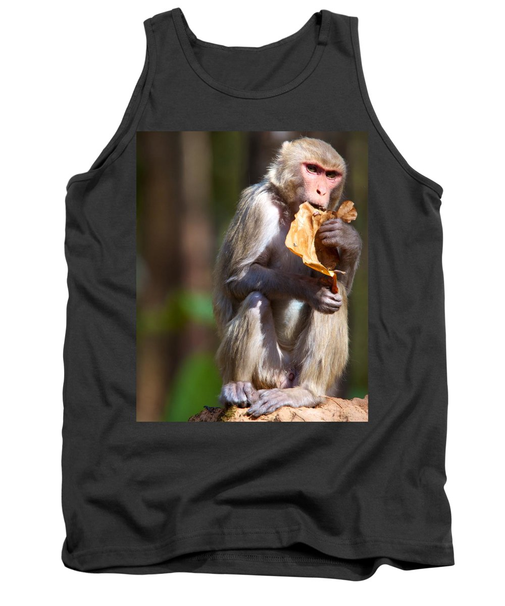 India Tank Top featuring the photograph Tasty Leaf by David Beebe