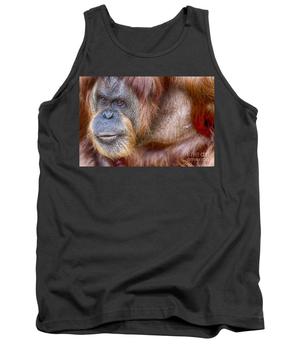 Orangutan Tank Top featuring the photograph The Orangutan Album by Douglas Barnard